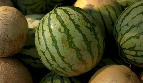 Summer Crops: How to Grow Melons