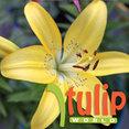 Tulip World's profile photo