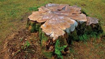 Cevet Tree Care