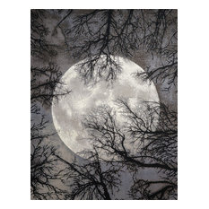 Twilight Twi17 Area Rug, Moon, 12'x15'