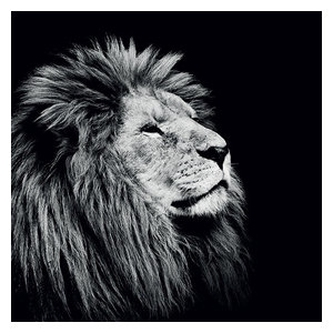 """Majesty"" Printed Canvas by Nicolas Evariste, 85x85 cm"
