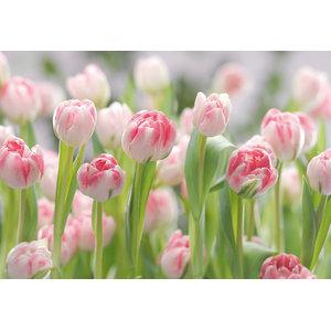 Floral Photo Wall Mural, Secret Garden Pink Tulip, 368x254 cm