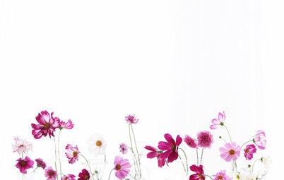 季節の花や葉を部屋で楽しむ、「庭花あそび」のすすめ