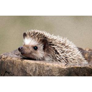 Hedgehog Gallery Door Mat, Small