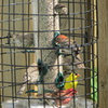 Finches, finches and more finches