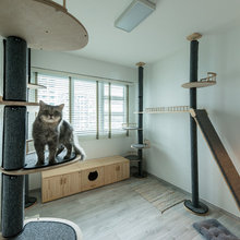 Spotted! ## Apartments Custom-Designed With Pets in Mind