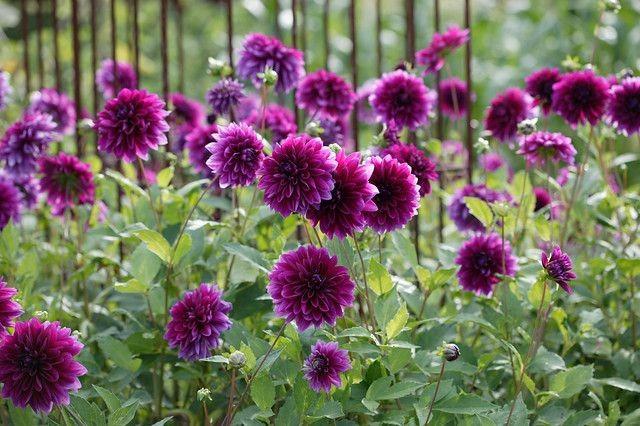 Garten Im September garten im september was jetzt zu tun ist
