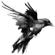 Raven's photo