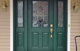 Green Front Door with frosted glass & sidelites