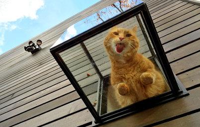Houzz call: Покажите нам ваших животных в самоизоляции