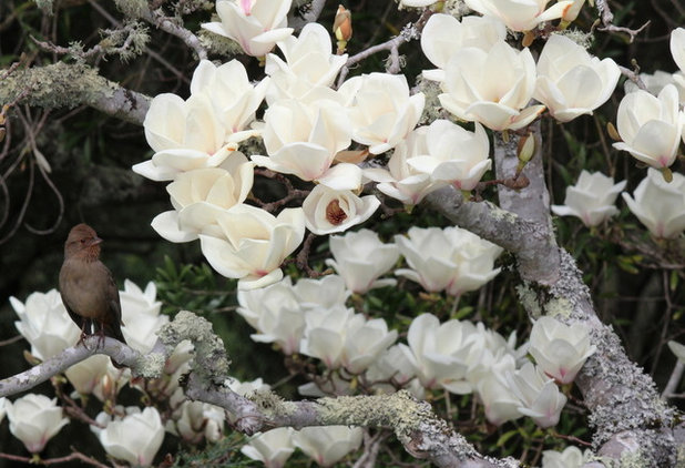 7 spectacular and practical spring flowering trees beautiful and practical spring flowering trees mightylinksfo Choice Image