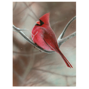 Clarence Stewart Cardinal Couple In Snow Canvas Art Contemporary Prints And Posters By Trademark Global Houzz