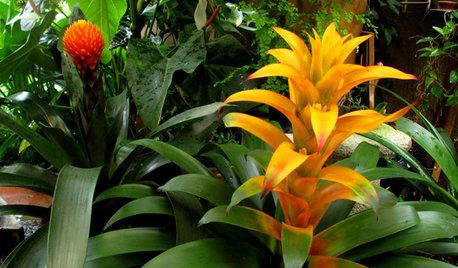 Houzz Гватемала: Райский сад, в котором всегда царит весна
