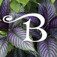 Blumen Gardens's profile photo