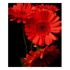 """Four Red Gerbera Daisies"" Limited Edition of 10 Photography by Alaina Williams"