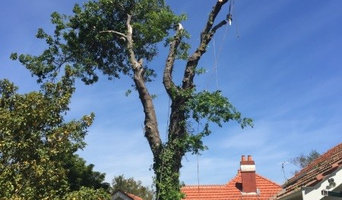 Tree Service's in Melbourne's Eastern Subrub's