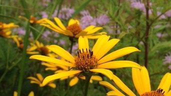 Native Wildflower Meadow