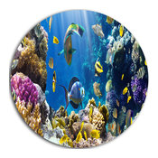 """Fish In Coral Reef, Seascape Photography Round Wall Art, 23"""""""