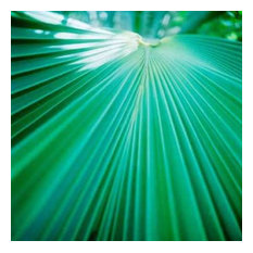 Palm Frond IV by Bob Stefko Canvas Print