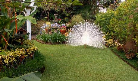 Garden Tour: It's Always Spring in This Guatemalan Paradise