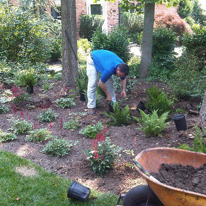Planting Ferns laid out my owner Peter Atkins