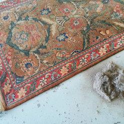 Oriental Rug and Carpet Clinic - Denver