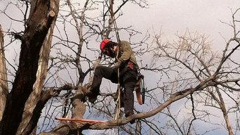 Bodhi Tree Care