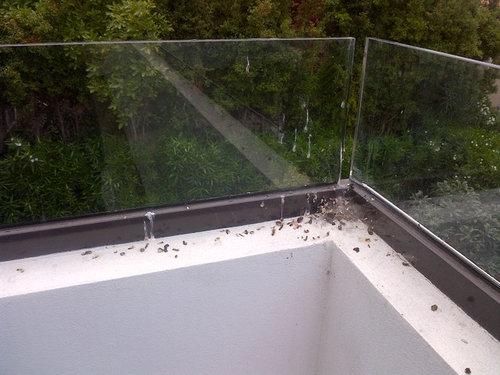 How To Stop Birds Landing On My Balcony Image Balcony