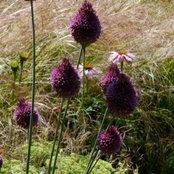 Jacquetta Menzies Landscape and Garden Design's photo
