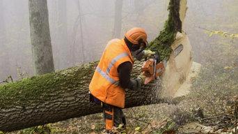 Tree Removal Stockton CA