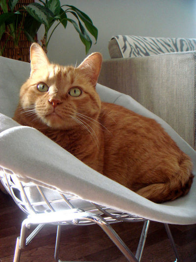 Simple Diane us cat Jackson will always be remembered for enjoying time in his own personal Bertoia chair