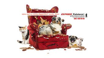 Sessel-Hunde
