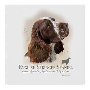 Gold Springer Spaniel