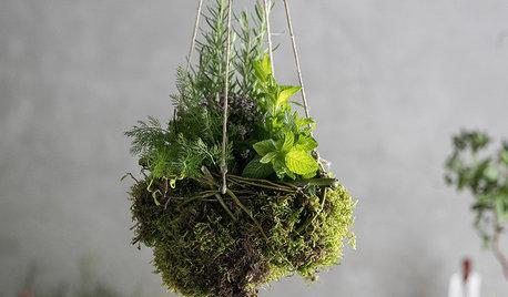Hazlo tú mismo: Un kokedama con plantas aromáticas para la casa
