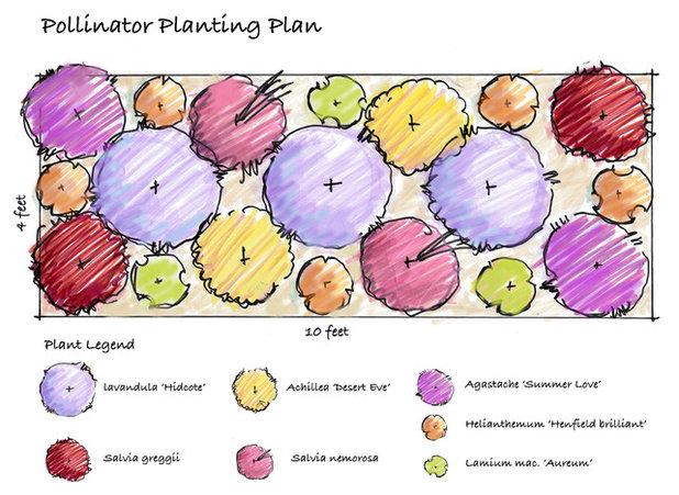 Traditional Site And Landscape Plan by Erin Lau Landscape Design- Seattle