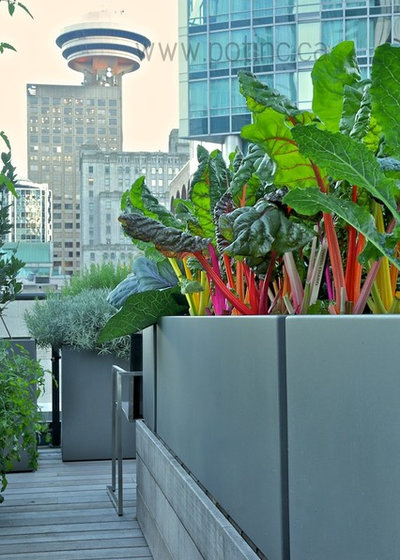 Modern Outdoor Pots And Planters by Pot Incorporated