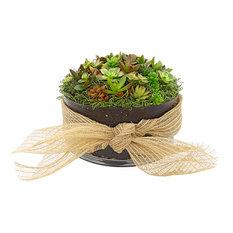 Succulent Bouquet Deluxe