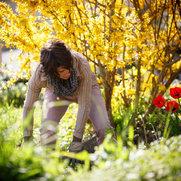 Photo de Jardin Velours