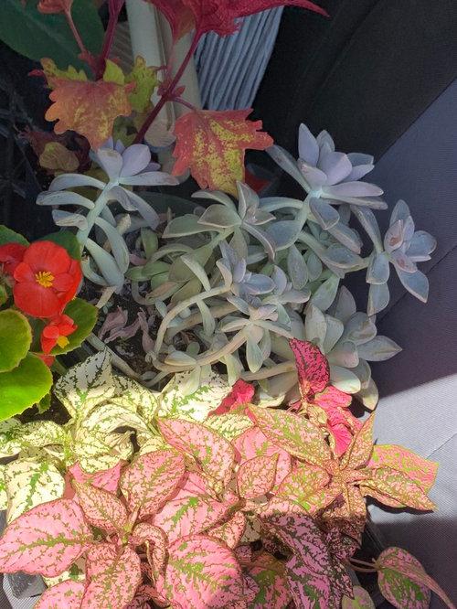 Pruning Succulent Help