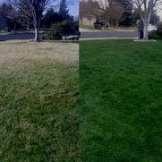 Xtreme Green Grassさんの写真