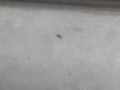 Tiny Bugs In Kitchen