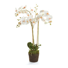 """Phalaenopsis 31"""" Orchid Drop-In White"""