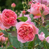 You're Going to Want to Stop and Smell These Roses