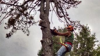 Pete Ellis, Arborist