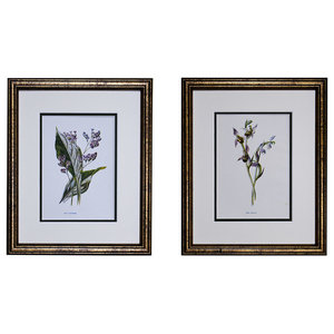 Original Vintage Botanical Flower Print, 100 Year+, Set of 2