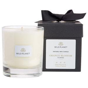 Wild Planet Orange Blossom Luxury Aromatherapy Candle, Single Wick