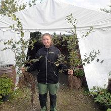 Vejledning til plantning af barrodsplanter