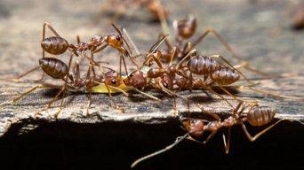 Pest Control Service Fremantle