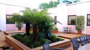 Aménagement paysager d'une terrasse d'un siège social : Ambiance luxuriante
