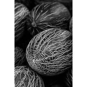 Melon Fine Art Print, Black and White, 75x50 cm